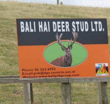 deer-stud-sign2